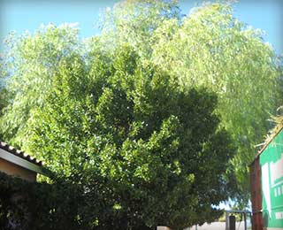 Tree Care Las Vegas