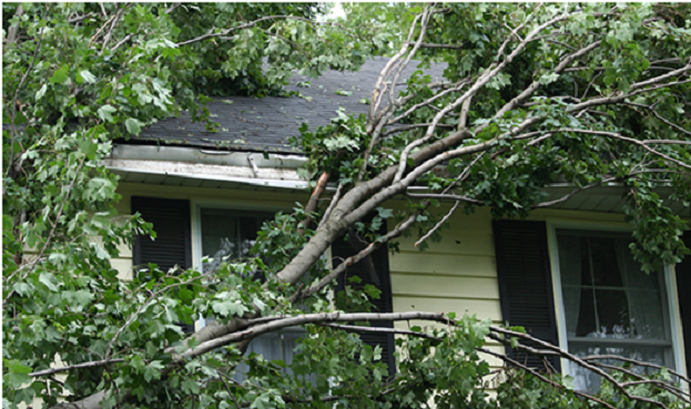 Tree Pruning Las Vegas