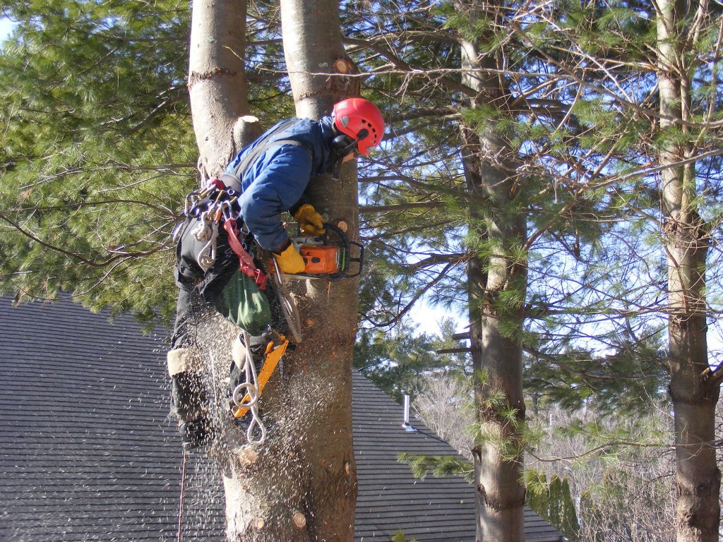 3 Safety Tips You Can Follow During Tree Removal  Nevada. Treadmill Workouts For Beginners. Workers Comp Settlements Loan Against Vehicle. One Word Domains For Sale Dental Email Lists. Barbara Walters Heart Surgery. Narcotic Addiction Treatment. Product Configurator Examples. Black Academy Of Arts And Letters. Shrinking Thyroid Nodules Advertise Your App