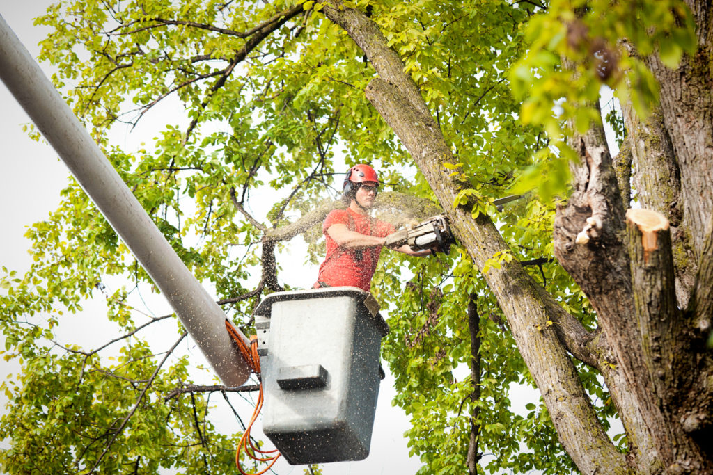 Tree Trimming Archives Nevada Tree Service