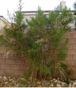 Tree Services of Nevada Tree Service